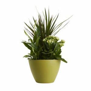 Planted houseplant arrangement in 17cm Pot