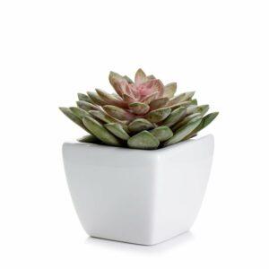 Wilko Artificial Succulent Plant in Ceramic Pot Ceramic, cement