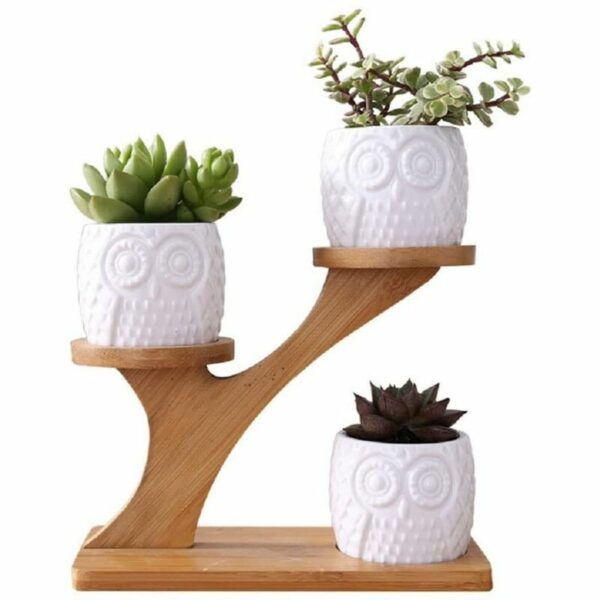 Cute Owl Pot Succulent Planter Flowerpot Decor for Home Office Desk?with Bamboo Saucers Stand Holder (Owl Pot with Stand)